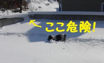 CIMG0343.jpg