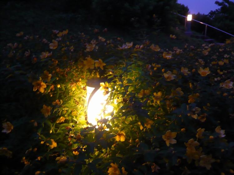 花を照らす明かり