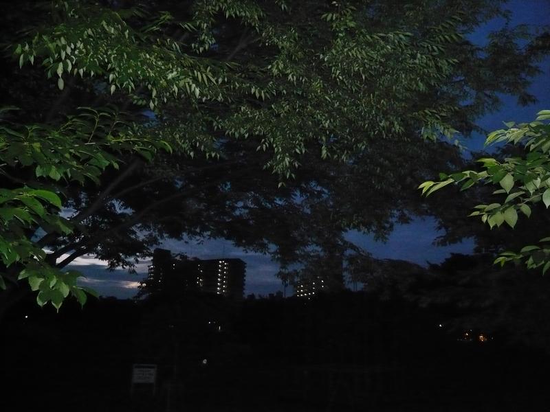 夜明け前の公園