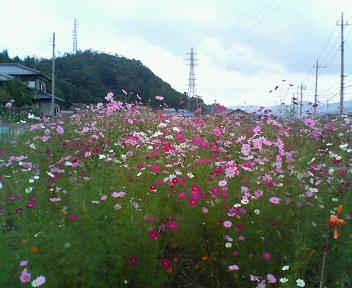 moblog_a46aba49.jpg