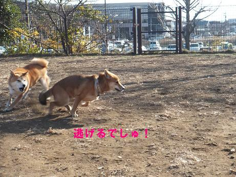 062c_20120102181347.jpg