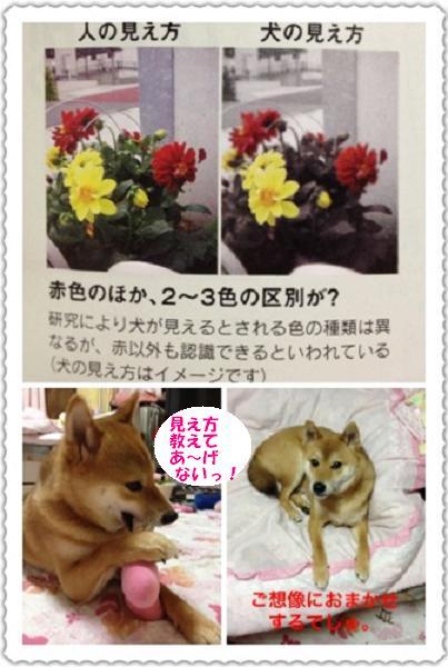 moblog_e78c3d3cc.jpg