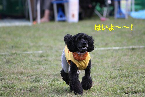 2011.7.17コッカプー祭り_145