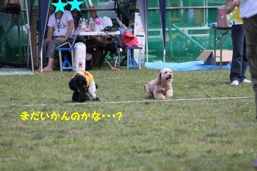 2011.7.17コッカプー祭り_144