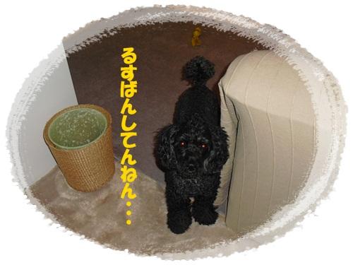 CIMG1139_20120218001557.jpg