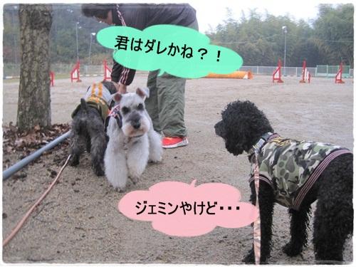 IMG_9880.jpg