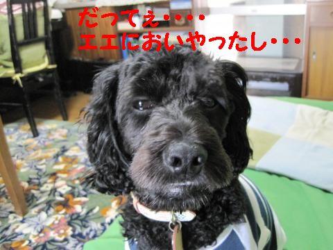 jemin+008_convert_20100429233239.jpg