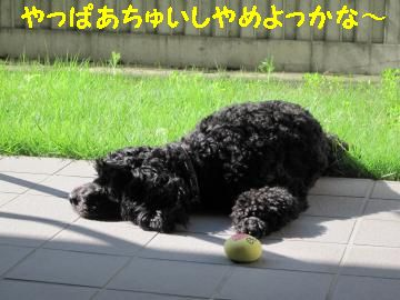 jemin+012_convert_20100607230943_20100704103926.jpg