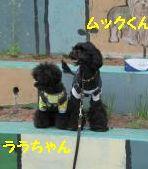 jemin+016_convert_20100526235748.jpg