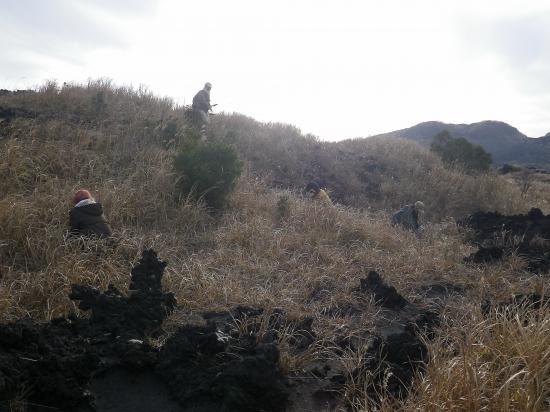 近年カルデラ内のサクユリが激減しています 当局と野増財産区の許可を得て サクユリの種を蒔きました