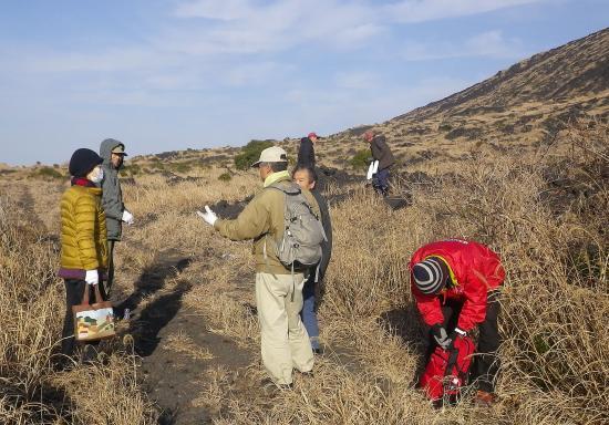 お願いです カルデラ内の百合根を掘らないでください。大島自然愛好会