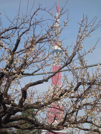 梅の開花が早い