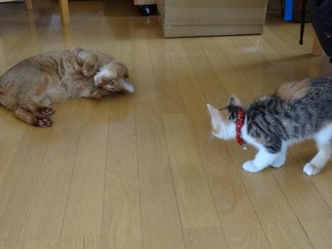 ジョゼおねーにゃんと01(2012.06.23)