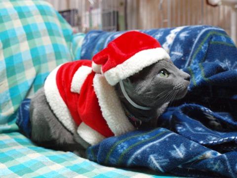さよならクリスマス01(2012.12.23)