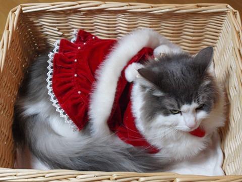 さよならクリスマス03(2012.12.23)