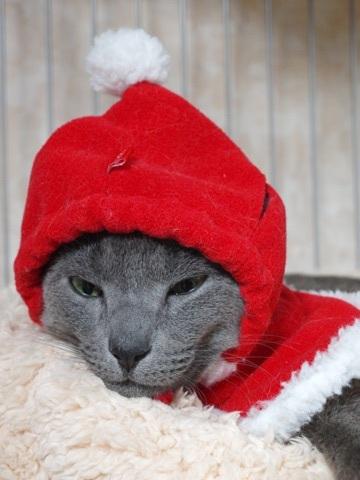 さよならクリスマス04(2012.12.23)
