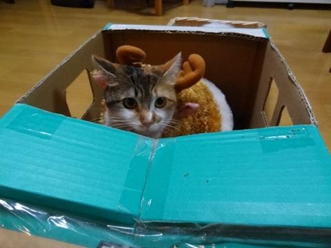 はじめてのクリスマス(2012.12.23)