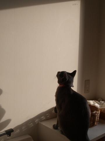 雪追い01(2012.12.29)