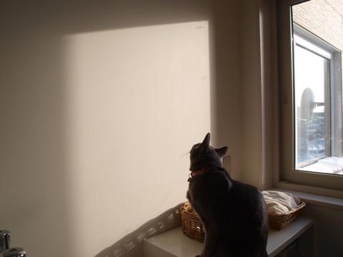 雪追い02(2012.12.29)