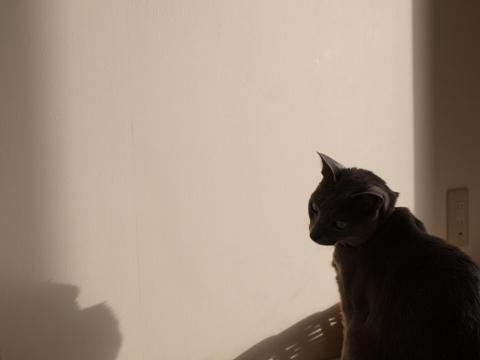 雪追い05(2012.12.29)