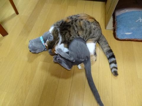 ニコなで02(2012.12.30)