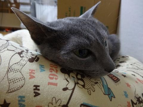 ねこさんとの遊び05(2013.01.09)