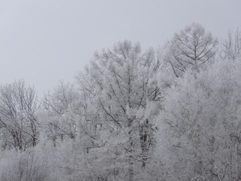 大雪の日01(22013.02.07)