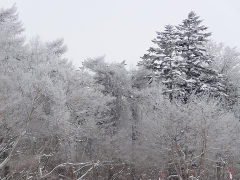 大雪の日03(2013.02.07)