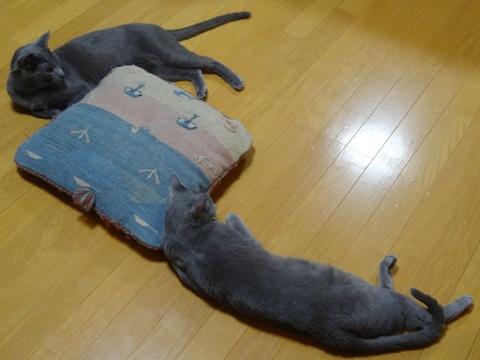 タテヨコナナメ02(2013.05.19)
