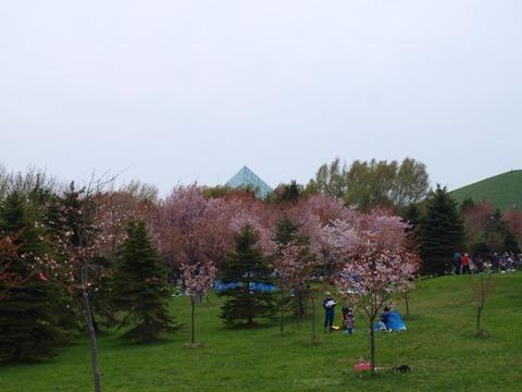 桜の向こうにピラミッド(2013.05.19)