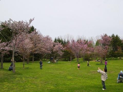 桜桜(2013.05.19)