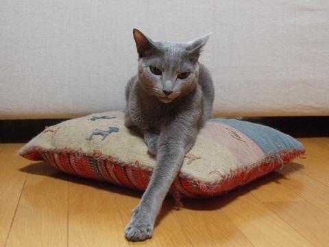 ニコあくび01(2013.05.28)