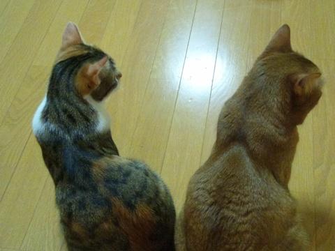 ほのぼの師弟♪01(2013.06.07)