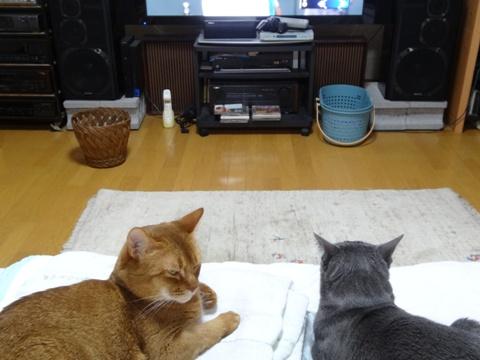 「誰か何とかして!」02(2013.06.12)