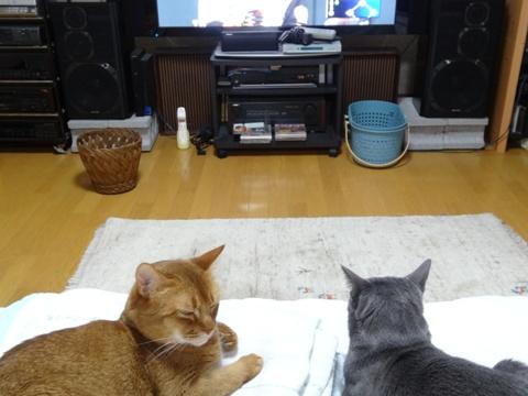 「誰か何とかして!」03(2013.06.12)