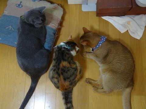 アレなでフレ(2013.07.09)