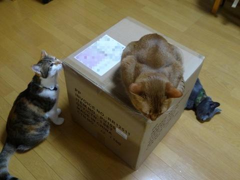 巨大な箱01(2013.07.19)