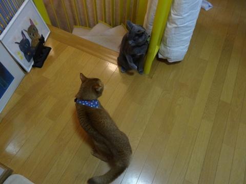 おねーにゃん、強し!01(2013.07.19)