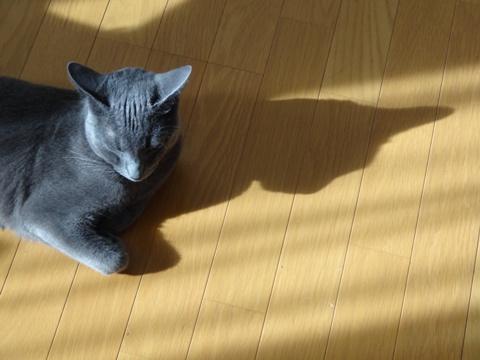 お留守番、よろしく02(2013.08.07)