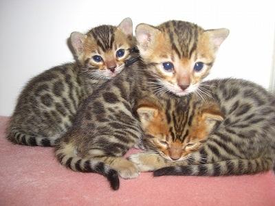 子猫たち 100303 016