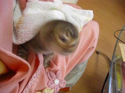 ひよりちゃん お風呂上り 20010410 001