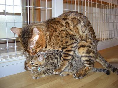 サム&ショコラ 2010416 003