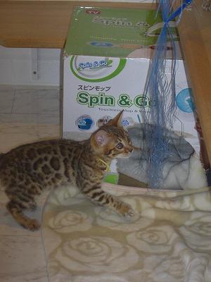楽しそうに遊ぶ「アスカ」! 2010418 002