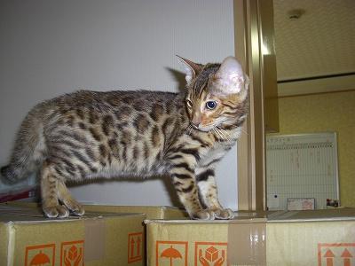 猫砂のタワー?   2010423 003