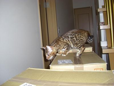 猫砂のタワー?   2010423 005