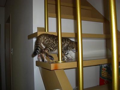 猫砂のタワー?   2010423 007