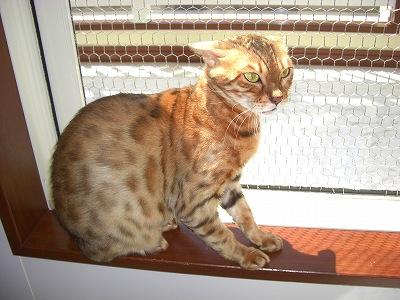 ハニー(マム)  2010428 002
