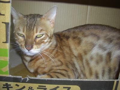 ハニー(マム)  2010428 005