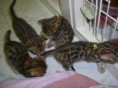 キャシーJr (生後30日) 2010505 028