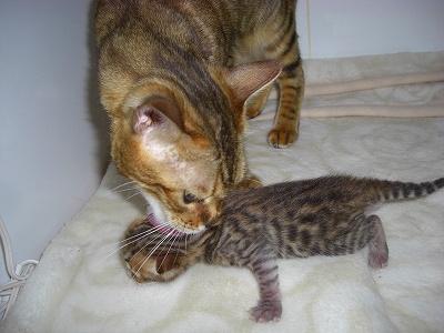 リリカ&Jr   2010511 029